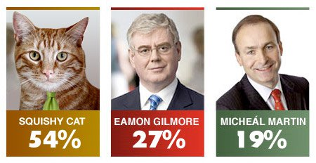 Opinion Poll for Squishy The Cat